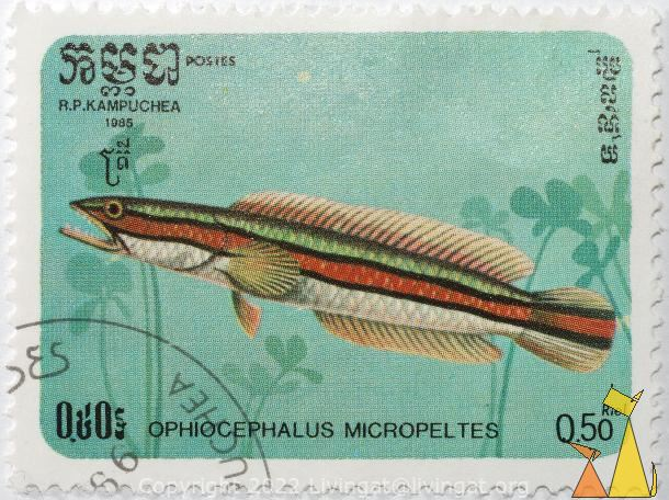 Giant snakehead,  R.P. Kampuchea, Cambodia, stamp, fish, Postes, 1985, 0.50 Riel, Ophiocephalus micropeltes, Channa micropeltes