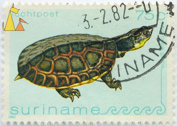 Gibba (Toadhead) Turtle, Suriname, stamp, reptile, turtle, 1982, luchtpost, 75 c Phrynops gibbus, Mesoclemmys gibba
