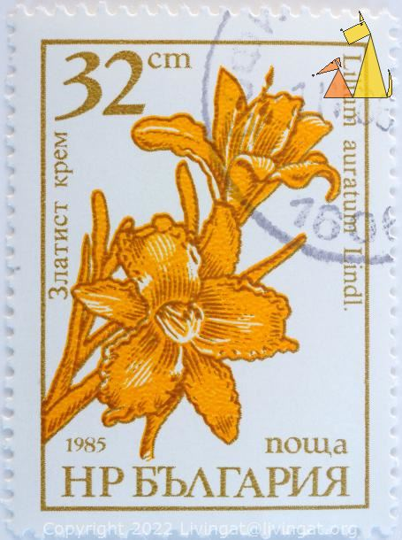 Gold-banded Lily, Bulgaria, stamp, plant, flower, 32 cm, nowa, 1985, Lilium auratum Lindl