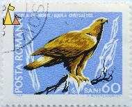 Golden Eagle, Romana, Romania, stamp, bird, 1968, Posta, H Meschendörfer, bird of prey, 60 Bani, Acvila de Munte, Aquila chrysaetos