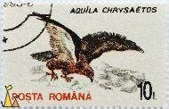 Golden Eagle, Romana, Romania, stamp, bird, bird of prey, 10 L, Posta, Aquila chrysaetos
