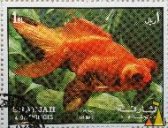 Golden Telescope Eye, Sharjah and Dependencies, Sharjah, UAE, stamp, fish, 1 Rl, Carassius auratus auratus, Air Mail