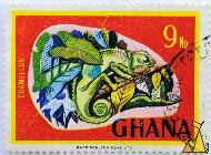Graceful chameleon, Ghana, stamp, reptile, red, Chamaeleo gracilis, chameleon, Harrison and sons ltd, 9 Np, red