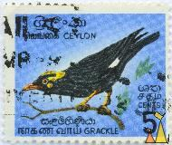 Grackle, Ceylon, Sri Lanka, stamp, bird, 5 Cents, Gracula religiosa