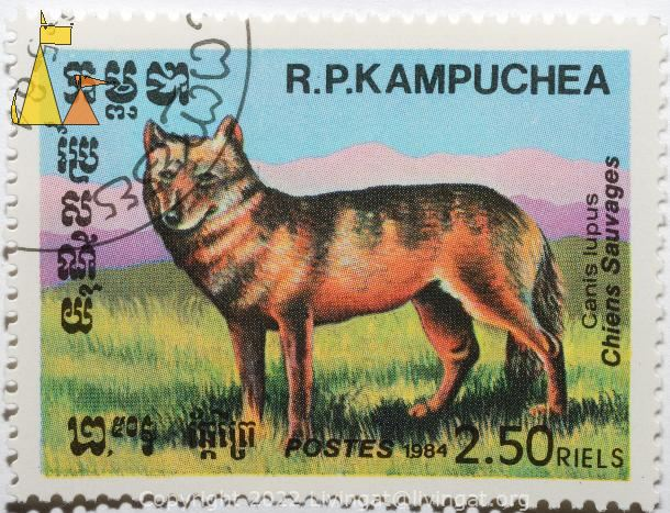 Gray wolf, R.P. Kampuchea, Cambodia, stamp, mammal, Postes, 1984, 2.50 Riels, Chiens Sauvages, Canis lupus