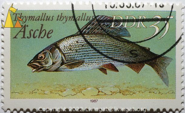 Grayling, DDR, Germany, stamp, fish, Äsche, 35, 1987, Thymallus thymallus