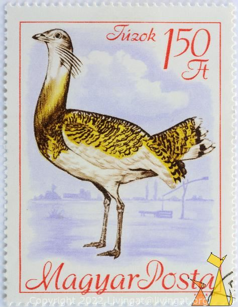Great Bustard, Mayar, Hungary, stamp, bird, Otis tarda, Fule M, 1.50 Ft, Tuzok, Posta
