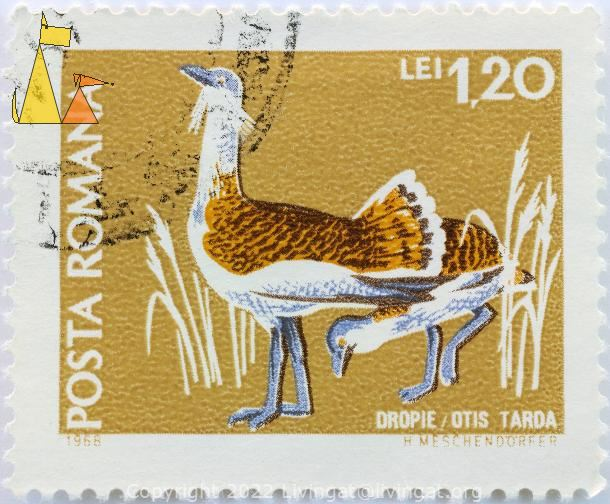 Great Bustard, Romana, Romania, stamp, bird, 1968, Posta, H Meschendörfer, 1.20 Lei, Dropie, Otis tarda