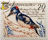 Great Spotted Woodpecker, Ceskoslovensko, Czechoslovakia, stamp, bird, L Jirka, K Lvolinsky, Brehm, 20 h, Dryobates major Pinetorum, Dendrocopos major pinetorum