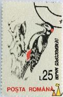Great Spotted Woodpecker, Romana, Romania, stamp, bird, Dendrocopos major, Posta, 25 L