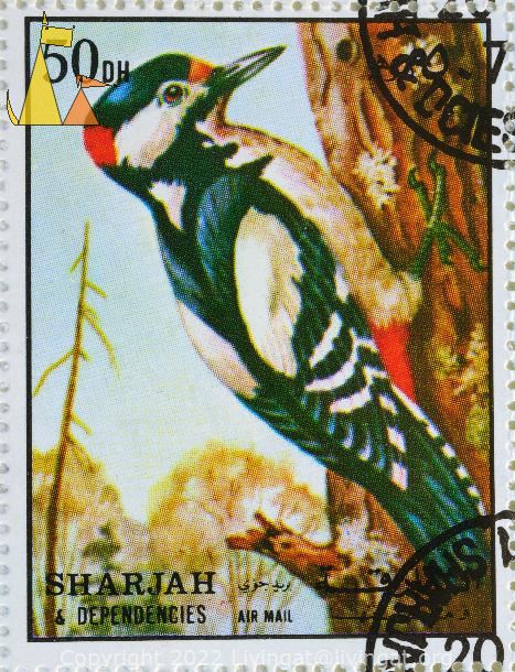 Great Spotted Woodpecker, Sharjah and Dependencies, Sharjah, UAE, stamp, bird, Dendrocopos major, 50 Dh, Air Mail