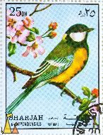 Great Tit in flowering tree, Sharjah and Dependencies, Sharjah, UAE, stamp, bird, Parus major, 25 Dh, Air Mail