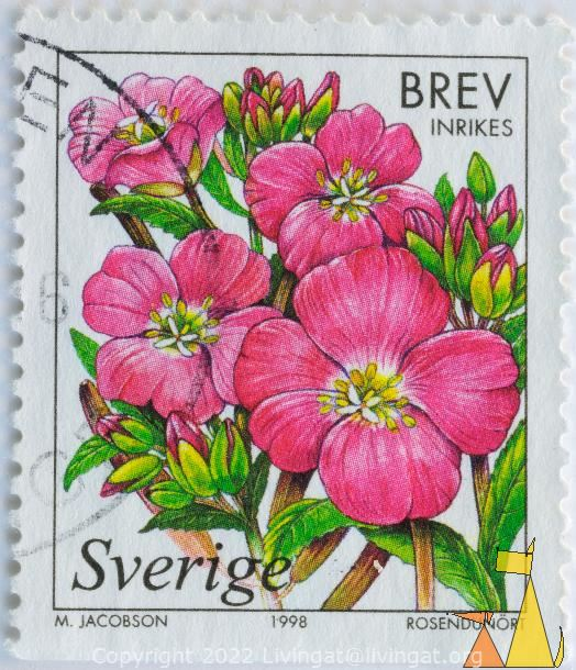 Great Willowherb, Sverige, Sweden, stamp, plant, brev, inrikes, Rosendunört, 1998, M Jacobson, flower, Epilobium hirsutum