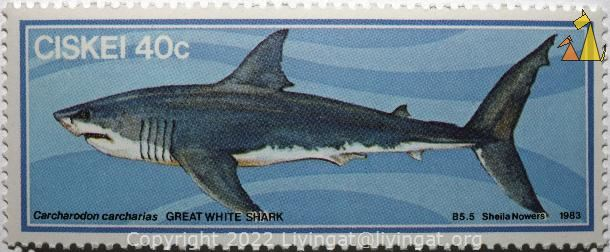 Great white shark, Ciskei, stamp, shark, Sheila Nowers, B5.5,  1983, 40 c, Great white shark, Carcharodon carcharias