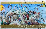 Greater Flamingo, Republique du Senegal, Senegal, stamp, bird, J Van Noten, 1974, 250 F, Poste Aerienne, Flamants Roses, Phoenicopterus roseus
