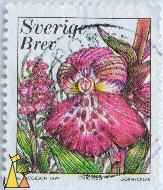 Green-winged Orchid, Sverige, Sweden, stamp, plant, flower, Inrikes, Brev, M Jacobson, 1999, Göknycklar, orchid, Anacamptis morio