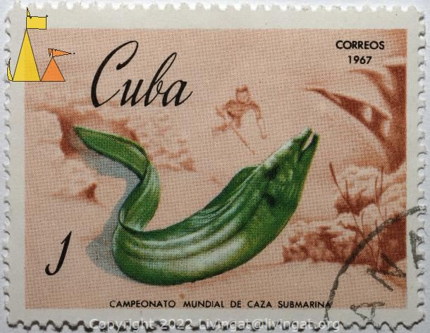 Green Moray, Cuba, stamp, fish, 1, correos, 1967, Gymnothorax funebris, free-diving, spear fishing