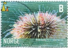 Green Sea Urchin, Norge, Norway, stamp, B, Kråkebolle, 2006, Strongylocentrotus droebachiensis