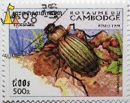 Green beetle, Royaume du Cambodge, Cambodia, stamp, insect, 500 R, Postes, 1998, Carabus auronitens, Carabus auronitens.Fabr., Phnom Penh