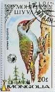 Grey-headed Woodpecker, Mongolia, stamp, bird, Picus canus, 1987, 20, GM