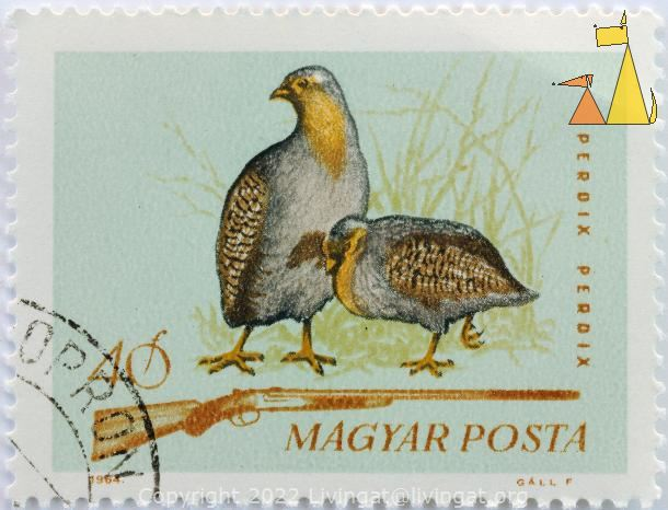 Grey Partridge, Magyar, Hungary, stamp, bird, Perdix perdix, Gall F, 1964, 40 f, shotgun, Posta, game bird