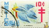Grey and Yellow, Mexico, stamp, fish, 1964, 1964.65, 10 c, J SolisM, Betta splendens