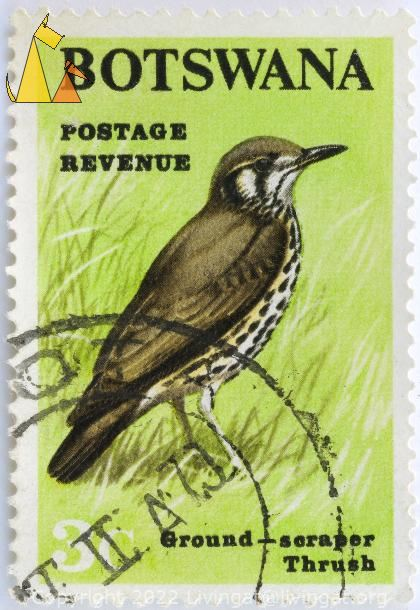 Ground-scraper Thrush, Botswana, stamp, 3 c, green, postage, revenue, Psophocichla litsitsirupa