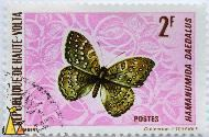 Guineafowl Butterfly, Republique de Haute-Volta, Burkina Faso, stamp, insect, butterfly, Postes, Collectiom P Terrible, P Lambert, 2 F, Hamanumida daedalus