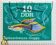 Guppy on Green, DDR, Germany, stamp, fish, guppy, Poecilia reticulata, green, Spitzschwanz, 20