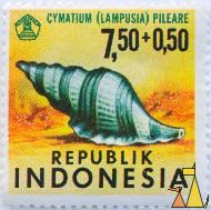 Hairy Triton, Republik Indonesia, Indonesia, stamp, shell, 7.50+0.50, Lampusia, Cymatium pileare