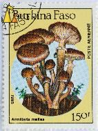 Honey Mushrooms, Burkina Faso, stamp, mushrom, 1985, Postes, 150 f, Armillaria mellea, Armillaria limonea