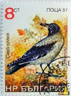Hooded Crow, Bulgaria, stamp, bird, autumn, worm, Corvus cornix, 8 ct, nowa, 87, Corvus corone cornix
