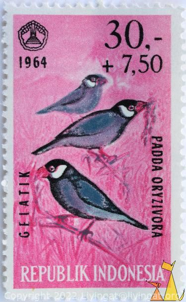 Java Sparrow, Republik Indonesia, Indonesia, stamp, bird, 1964, 30+7.50, Gaiatik, Padda oryzivora, pink