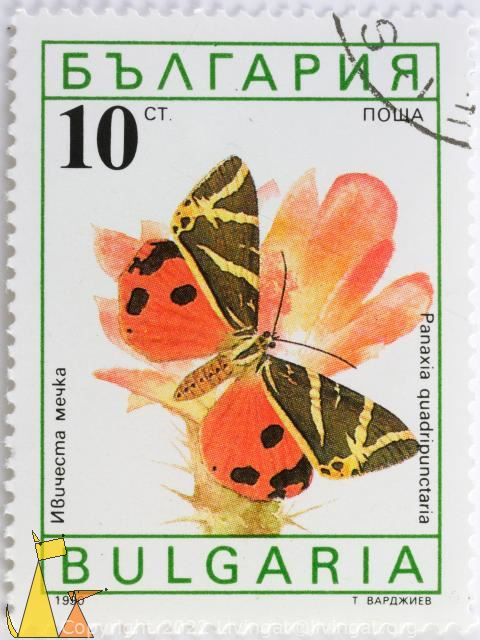 Jersey Tiger Moth, Bulgaria, stamp, insect, butterfly, 10 Ct, nowa, 1990, moth, Panaxia quadripunctaria