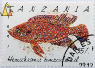 Jewelfish, Tanzania, stamp, fish, 1991, 35, Hemichromis bimaculatus