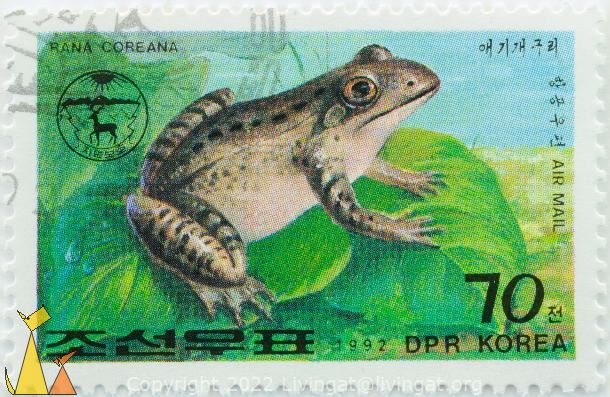 Korean Brown Frog, DPR Korea, North Korea, stamp, reptile, frog, 70, 1992, Air Mail, Rana coreana