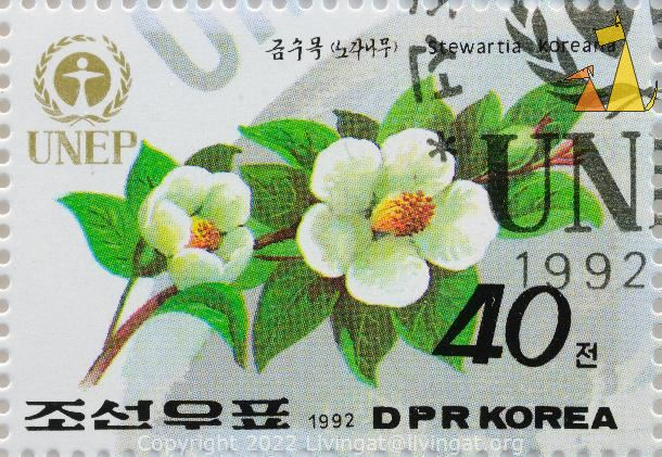 Korean Stewartia, DPR Korea, North Korea, stamp, UNEP, 1992, 40, Stewartia koreana