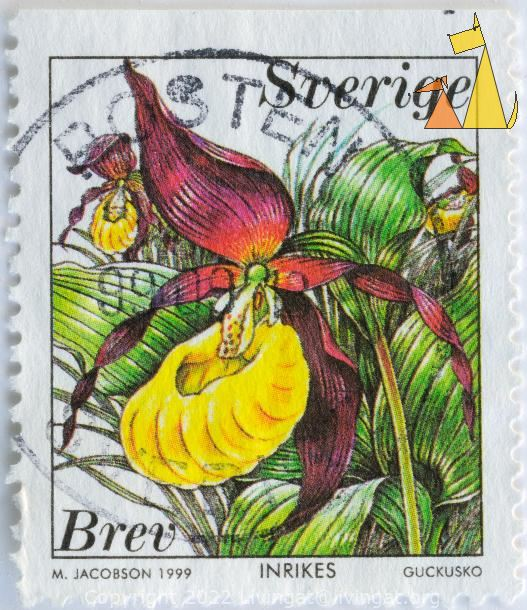 Lady's-slipper Orchid, Sverige, Sweden, stamp, plant, flower, orchid, 1999, Inrikes, Brev, M Jacobson, Guckusko, Cypripedium calceolus