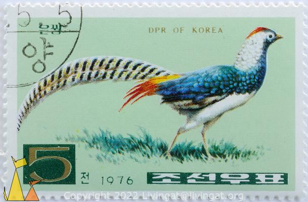 Lady Amherst's Pheasant, DPR of Korea, North Korea, stamp, bird, 1976, 5, Chrysolophus amherstiae