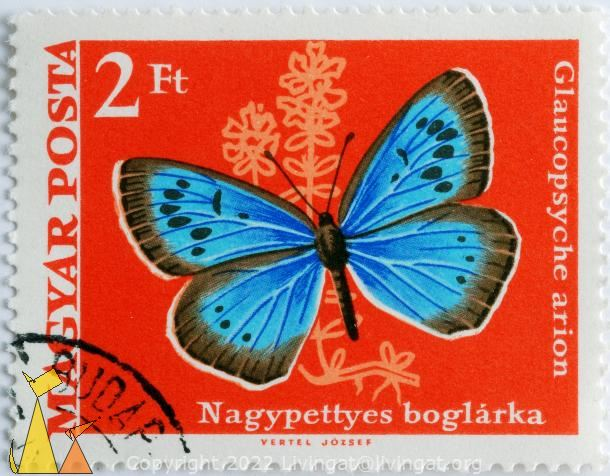 Large blue on red, Magyar, Hungary, stamp, insect, butterfly, Vertel Jozsef, Posta, Phengaris arion, Large blue, Nagypettes boglarka, 2 Ft, Glaucopsyche arion