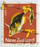 Leather Jacket, New Zealand, stamp, fish, brown, 7 c, Cantherhines fronticinctus