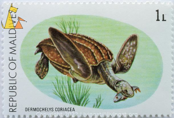 Leatherback, Republic of Maldives, Maldives, stamp, turtle, reptile, fish, 1 L, Dermochelys coriacea