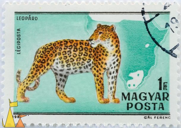Leopard Looking Back, Magyar, Hungary, stamp, mammal, cat, Gal Ferenc, 1981, 1 Ft, Posta, Leopard, Ligiposta, Panthera pardus