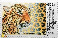 Leopard, Royaume du Cambodge, Cambodia, stamp, mammal, Postes, 1998, 1000 R, Panthera pardus