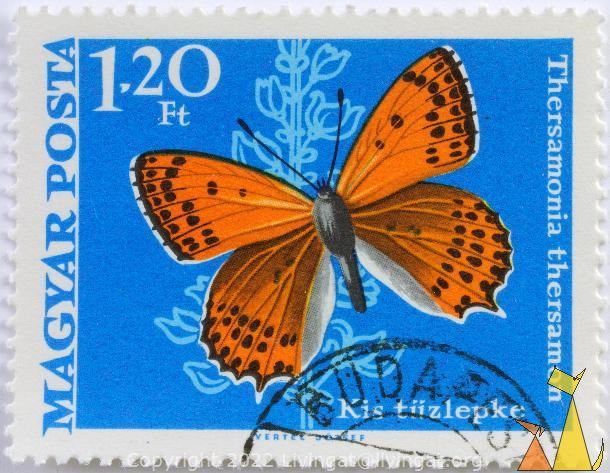 Lesser Fiery Copper, Magyar, Hungary, stamp, insect, butterfly, Vertel Jozsef, Posta, Thersamonia thersamon, Lycaena thersamon, Lesser Fiery Copper, 1.20 Ft, Kis tuzlepke