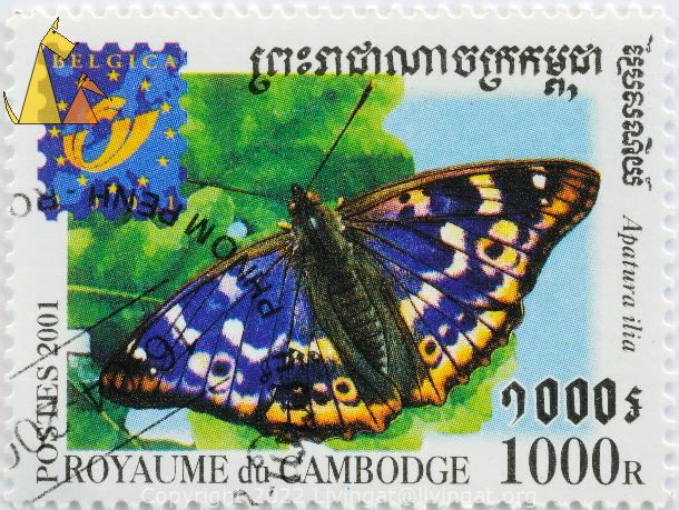 Lesser Purple Emperor, Royaume du Cambodge, Cambodia, stamp, insect, butterfly, Postes, 2001, Belgica, 1000 R, Apatura ilia