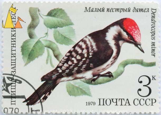 Lesser Spotted Woodpecker, CCCP, Russia, stamp, bird, woodpecker, Dendrocopos minor, 3 K, Noyta, 1979