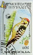 Lesser Spotted Woodpecker, Mongolia, stamp, Dryobates minor, bird, Dendrocopos minor, 1987, 60