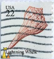 Lightning Whelk, USA, stamp, shell, 22, Busycon contrarium