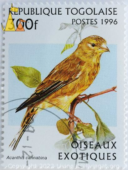Linnet, Republique Togolaise, Togo, stamp, postes, bird, 1996, Oiseaux exotiqies, 300 f, Acanthis cannabina